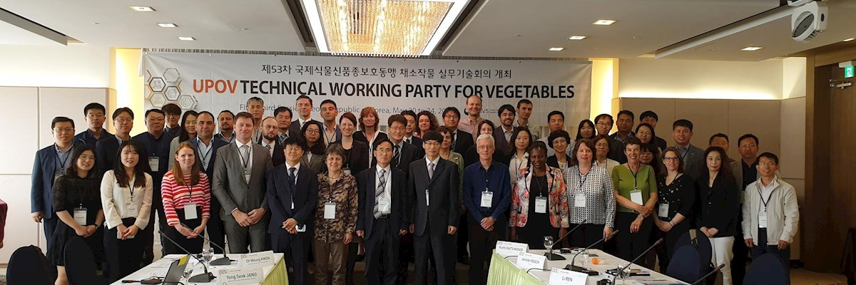 SAAS Researchers Participated in the UPOV Technical Working Party for Vegetables (TWV) Meeting